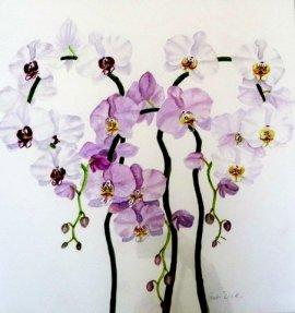 Phalaenopsis sp W/c 45cm x 45 cm $650